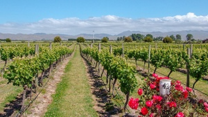 Australia Vineyards for Sale