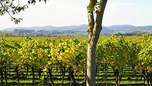 Belgium Vineyards for Sale