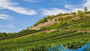 British Columbia Vineyards for Sale