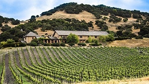 California Vineyards for Sale