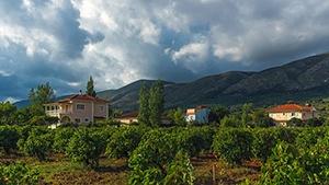 Greece Vineyards for Sale