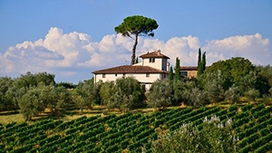 Italy Vineyards for Sale