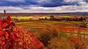 Massachusetts Vineyards for Sale