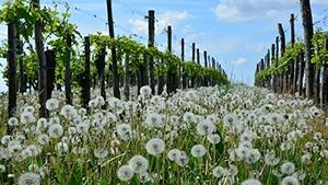Netherlands Vineyards for Sale