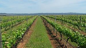 New Brunswick Vineyards for Sale