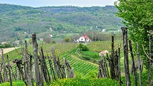 New Hampshire Vineyards for Sale
