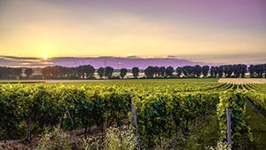 New Jersey Vineyards for Sale