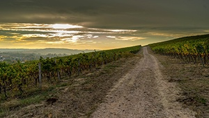 New Mexico Vineyards for Sale