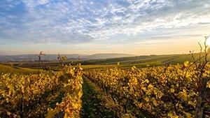 New York Vineyards for Sale