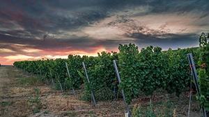 Nova Scotia Vineyards for Sale