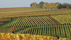 Ohio Vineyards for Sale