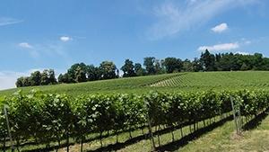 Ontario Vineyards for Sale