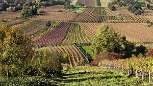 Oregon Vineyards for Sale