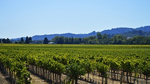 Pennsylvania Vineyards for Sale