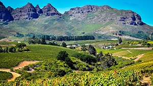 South Africa Vineyards for Sale