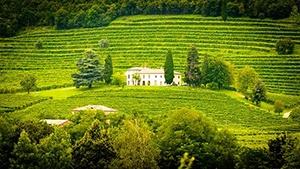 Switzerland Vineyards for Sale