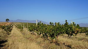 Tunisia Vineyards for Sale