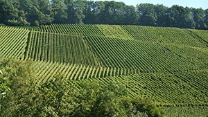 Turkey Vineyards for Sale