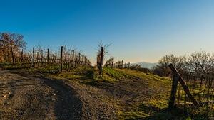 Washington Vineyards for Sale