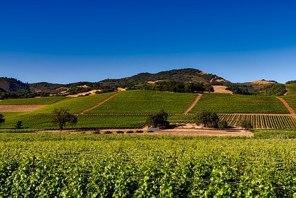 West Coast USA Vineyards and Wineries