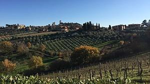 Mallorca Vineyards for Sale