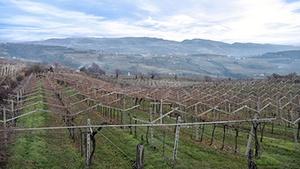 Montenegro Vineyards for Sale