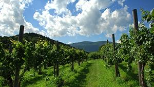 Portugal Vineyards for Sale